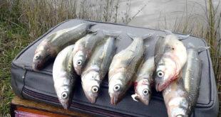 veda pesca del pejerrey