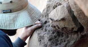 fósiles de Teratornos
