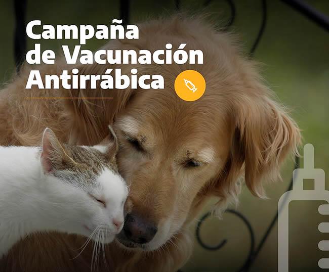 vacunación antirrábica